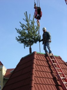 Evergreen Tree Affixed to Tower Roof